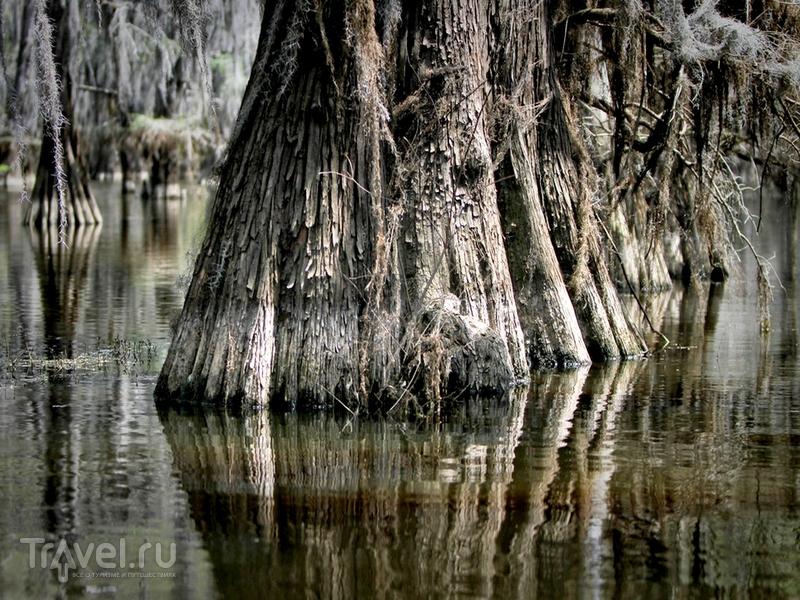 Формирование озера Каддо началось в конце XVIII века, США / США