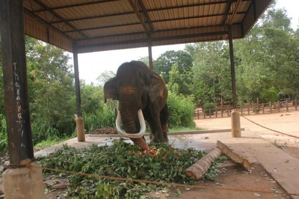 Шри-Ланка, Коггала / Шри-Ланка