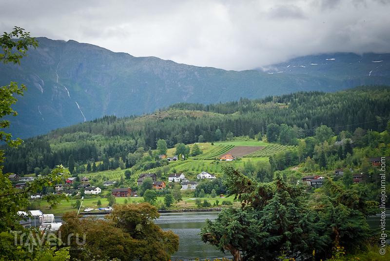 На берегу Хардангенфьорда / Фото из Норвегии