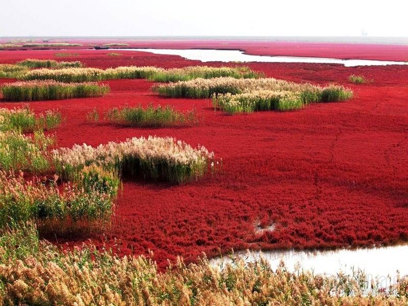 Красный пляж - одна из самых красочных природных достопримечательностей Китая / Китай
