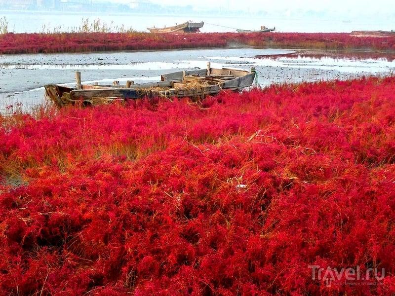 Необычным ярким цветом побережье обязано морским водорослям, Китай / Китай