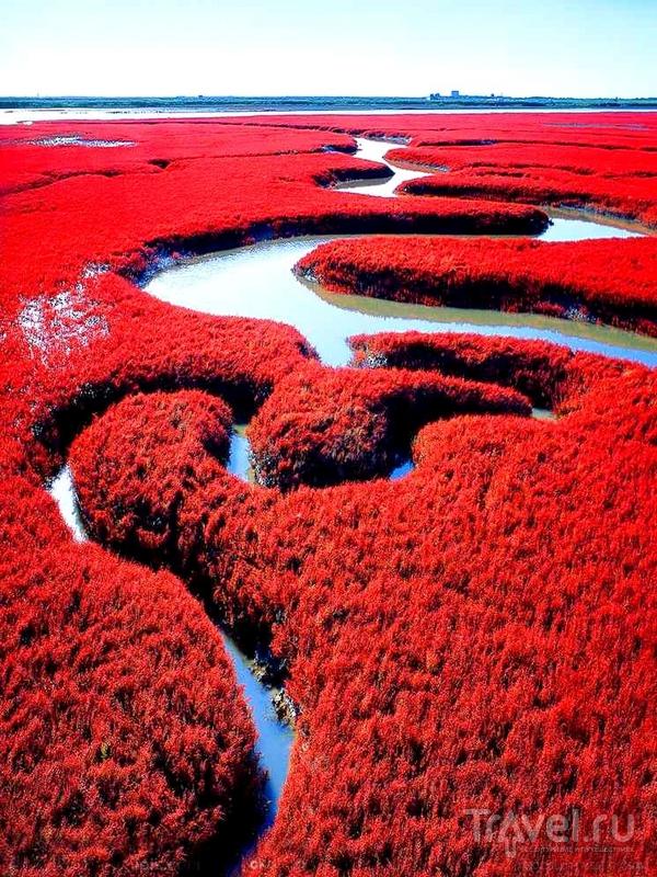 Заповедник Шуантай-Хэкоу в дельте реки Ляохэ, Китай / Китай