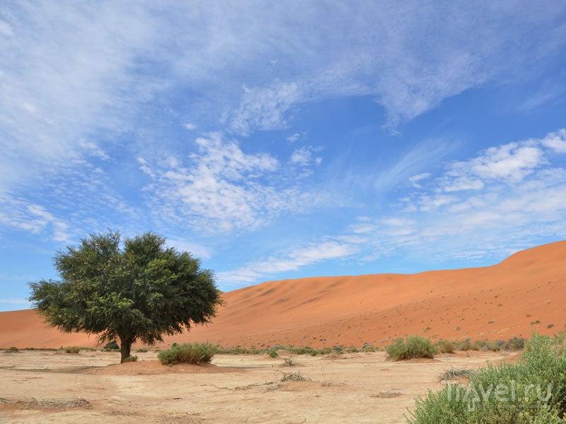 Намибия в апреле / Фото из Намибии