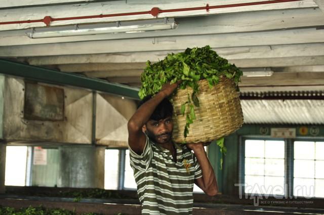 Шри-Ланка. Высокогорный чай / Шри-Ланка