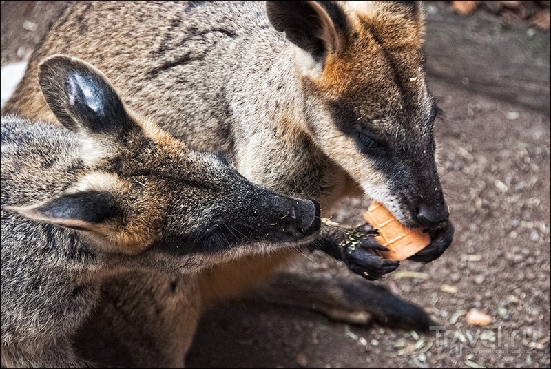 Австралия: парк Featherdale и Голубые горы / Фото из Австралии