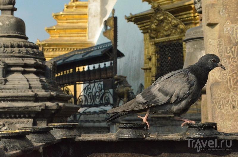 Храмовый комплекс Сваямбунатх / Фото из Непала