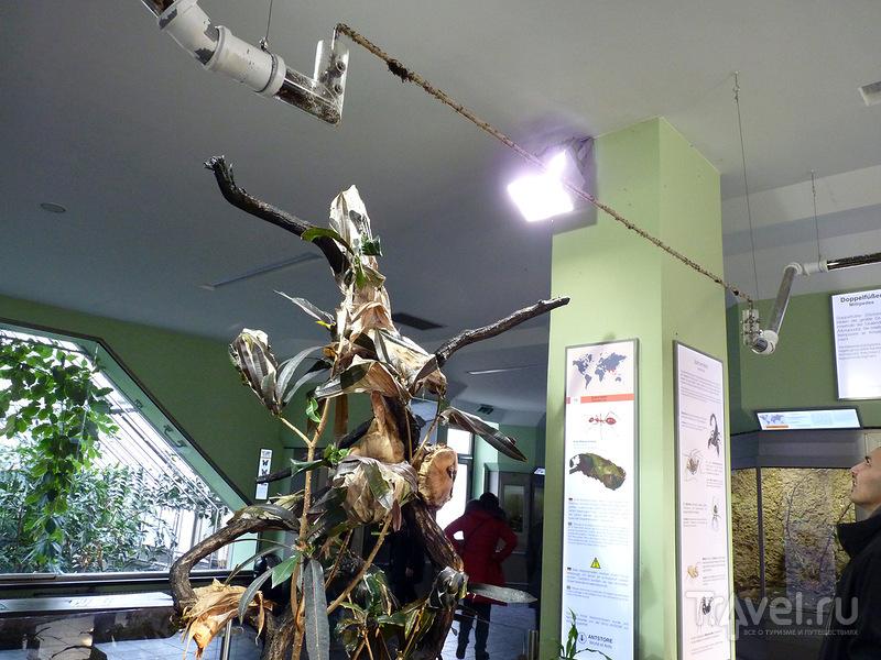 Берлинский аквариум / Германия