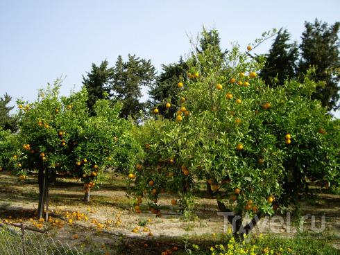 Пафос, Кипр / Кипр