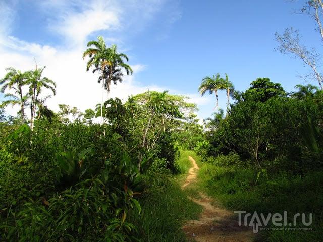 Колумбийская Амазонка. Пуэрто-Нариньо / Фото из Колумбии
