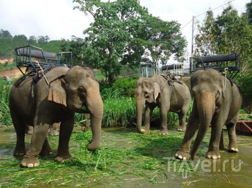 Экскурсия в Далат / Вьетнам