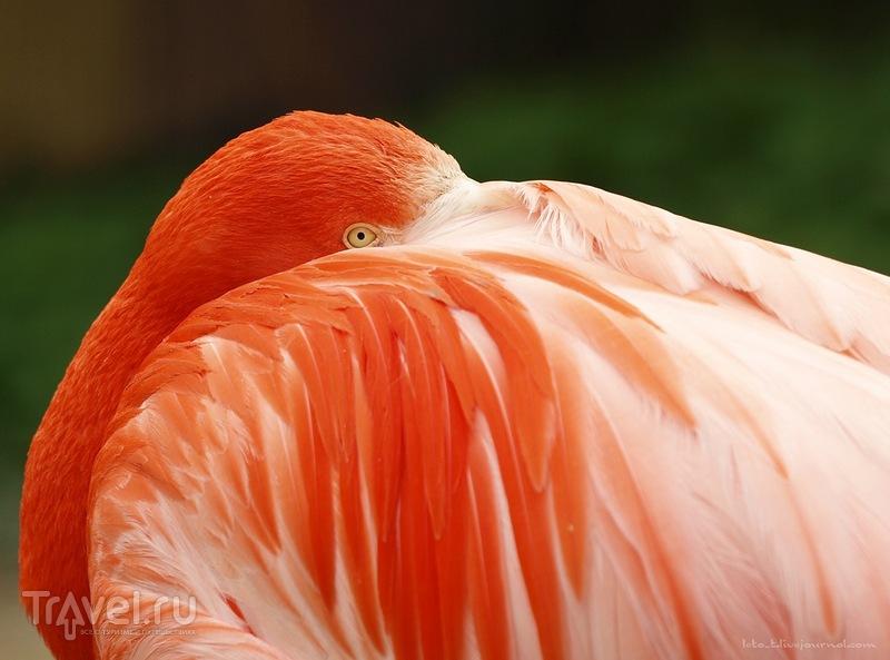 В шенбрунском зоопарке, Австрия / Фото из Австрии