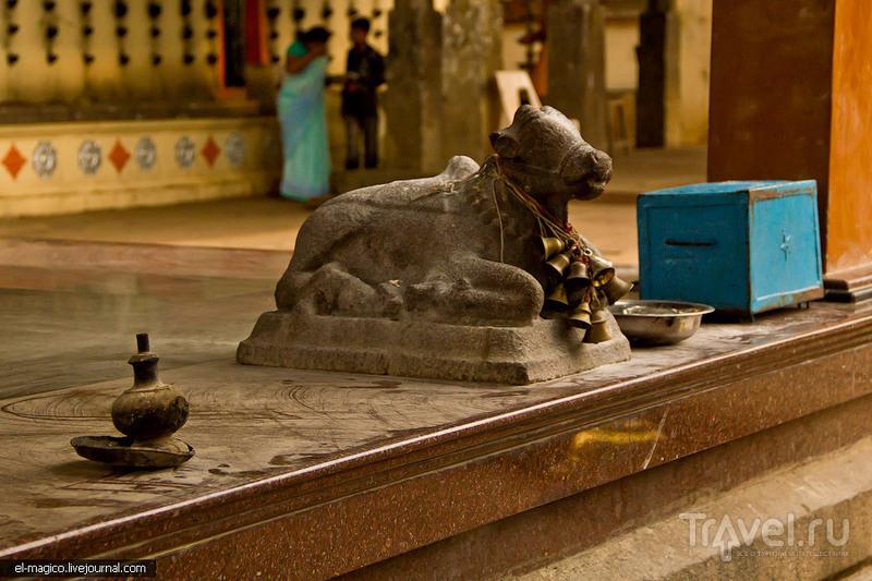 В храме Джанардхана Свами в Варкале, Индия / Фото из Индии
