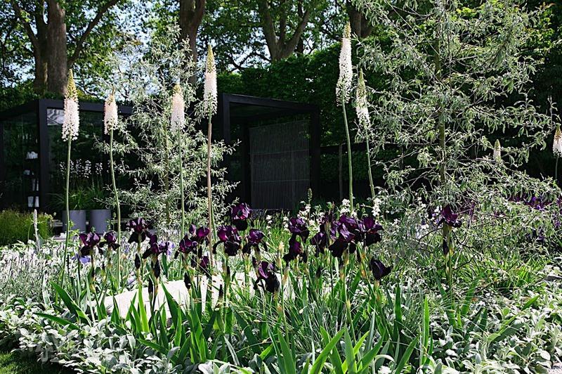 Chelsea flower show / Фото из Великобритании