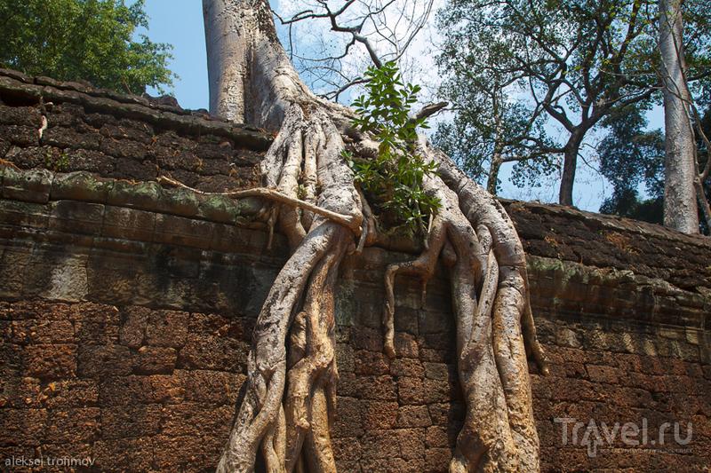 Храм Та-Пром в Ангкоре, Камбоджа / Фото из Камбоджи