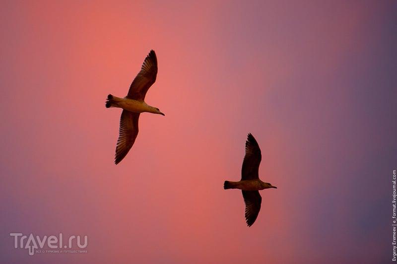 Стамбул и чайки / Турция
