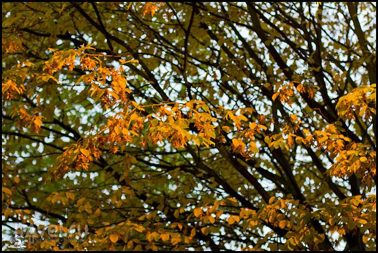 Осенний Лестер / Фото из Великобритании