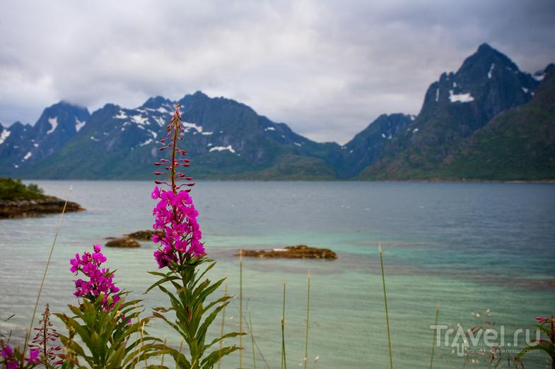 Тролльфьорд на Лофотенских островах, Норвегия / Фото из Норвегии
