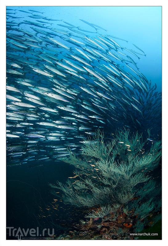 Таиланд. Ко-Панган. Остров в Сиамском заливе / Фото из Таиланда