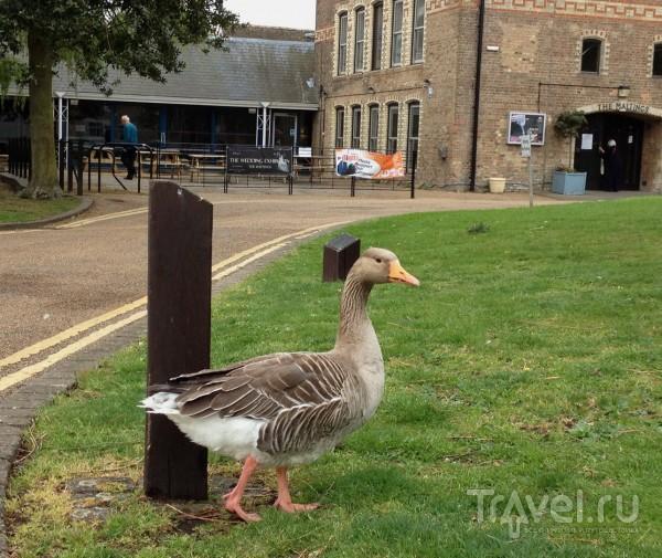 Животный мир Кембриджа и Ely / Великобритания