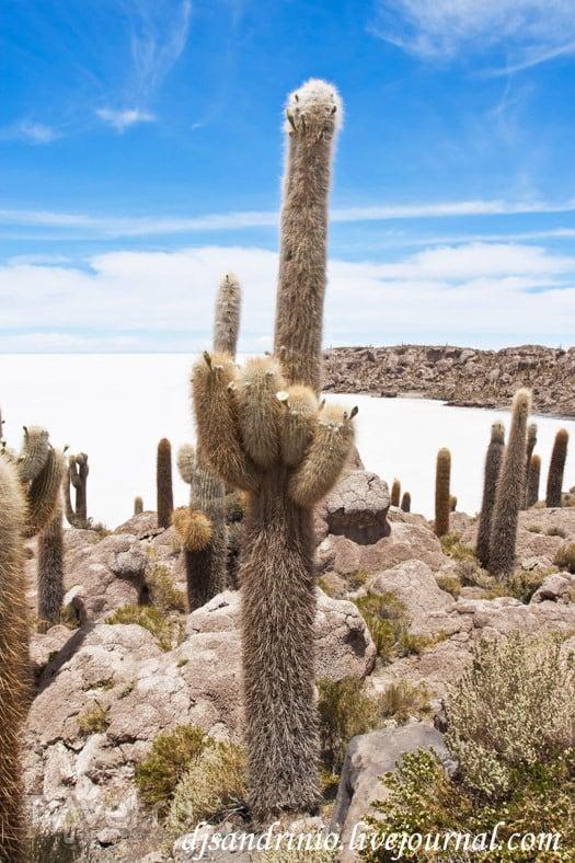 Solar de Uyuni, Incahuasi Island / Боливия