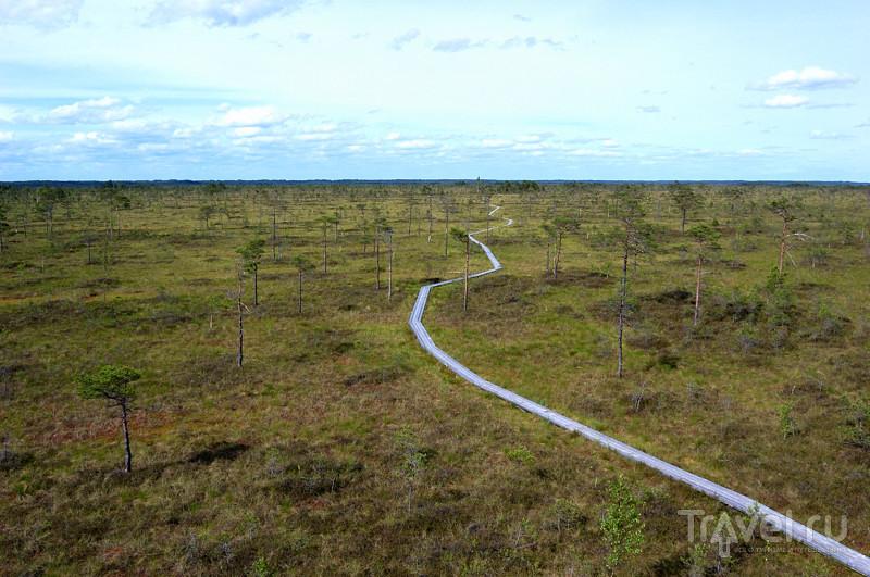 Болотная тропа Ингатси / Эстония