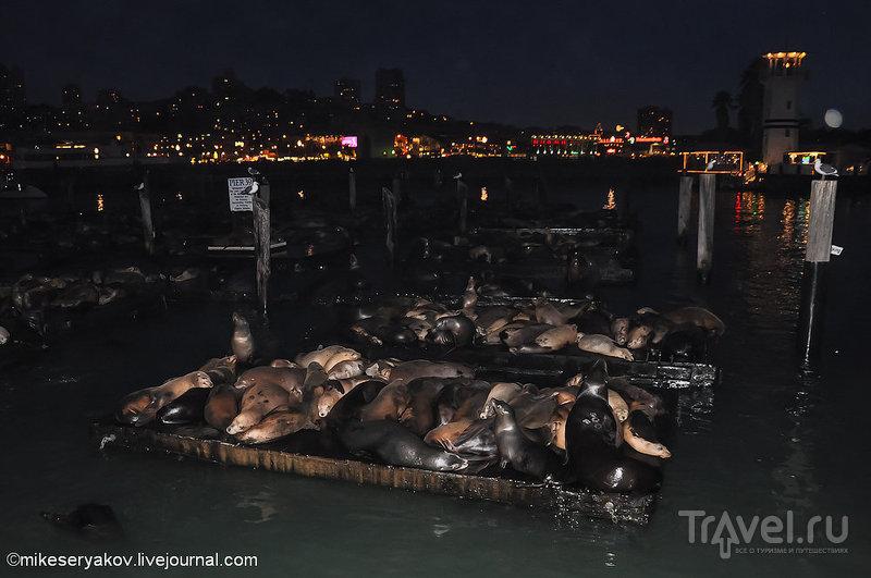 Рыбацкая пристань в Сан-Франциско, США / Фото из США