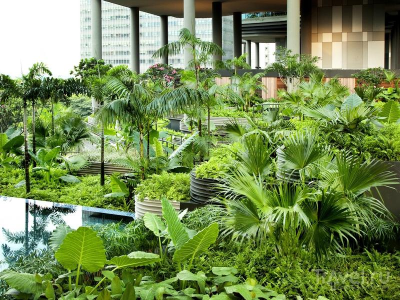 Тропические леса на фасаде отеля Parkroyal on Pickering в Сингапуре / Сингапур