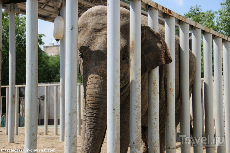 Харьковский зоопарк / Фото с Украины