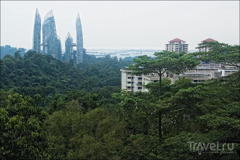 Прогулки по Сингапуру: Southern Ridges Walk / Сингапур