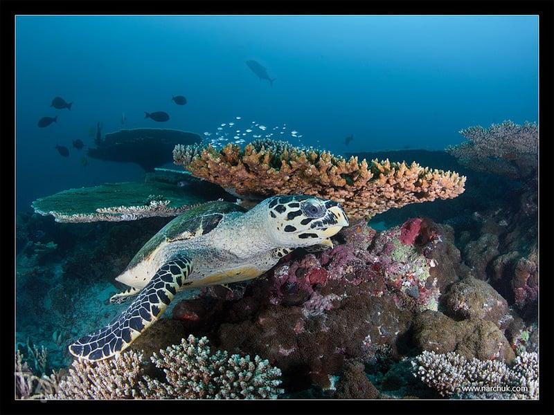 Мальдивы. Тропический айсберг / Фото с Мальдив