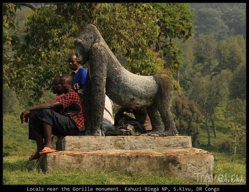 Гориллы в национальном парке Кахузи-Бьега, Конго / Фото из Руанды