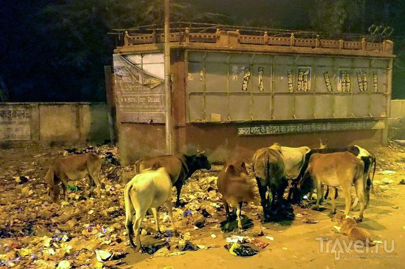 В городе Агра, Индия / Фото из Индии