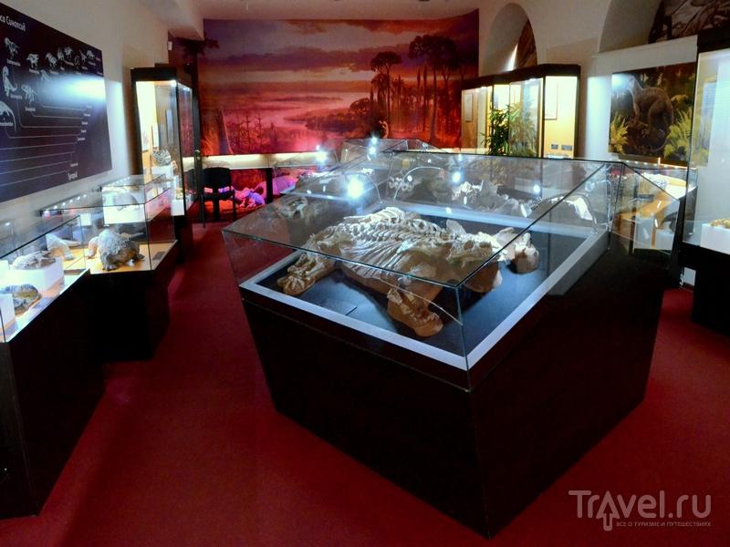 Вятский палеонтологический музей в Кирове, Россия / Фото из России