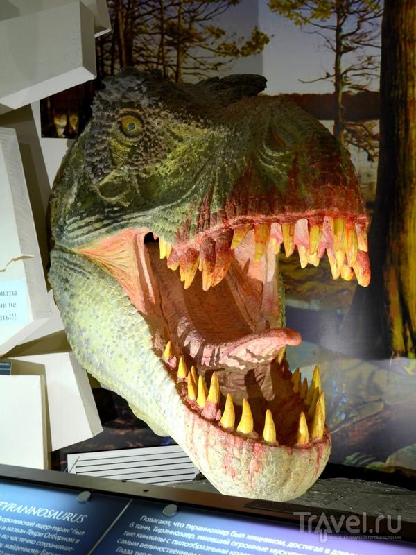 Экспонат Вятского палеонтологического музея, Россия / Фото из России