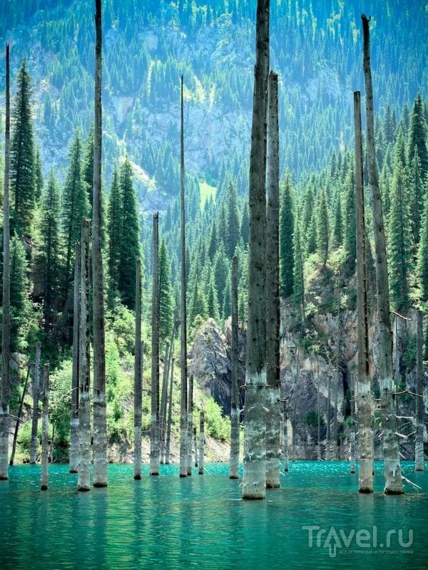 Расположенное в горной системе Тянь-Шань озеро Каинды, Казахстан / Казахстан