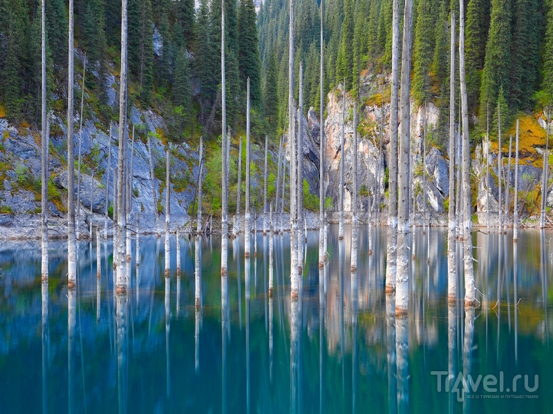 Торчащие из поверхности озера Каинды верхушки елей напоминают безжизненные пространства, Казахстан / Казахстан