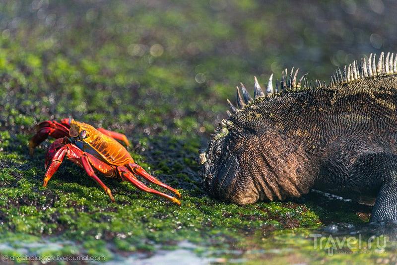 Галапагосы. Мыс Винсенте Рока и мыс Эспиноса / Фото из Эквадора