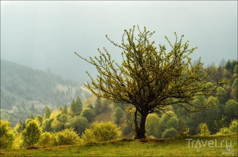 Карпаты, путевые заметки / Фото с Украины