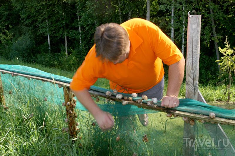 Ферма по выращиванию виноградных улиток / Фото из Латвии