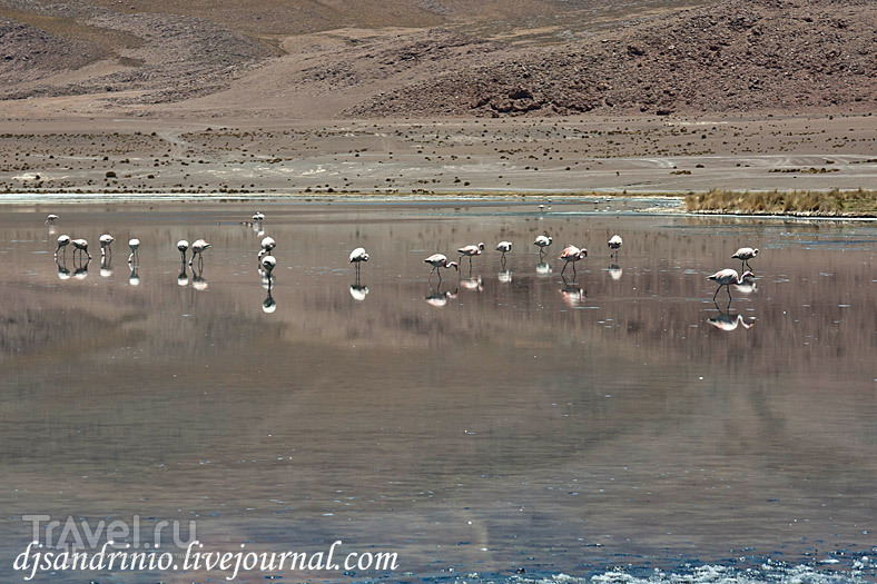 Laguna Canapa (Лагуна Канапа), Бразилия / Фото из Боливии