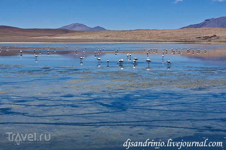Laguna Colorado (Лагуна Колорадо), Бразилия / Фото из Боливии