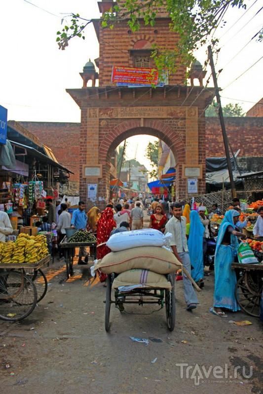 В деревне Фатепур, Индия / Фото из Индии