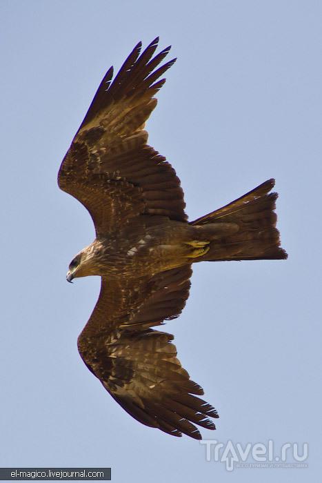 Варкала: окрестности, люди, звери, птицы / Фото из Индии