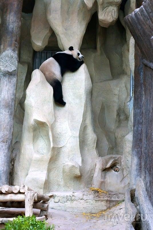 Зоопарк в Чианг Мае / Таиланд