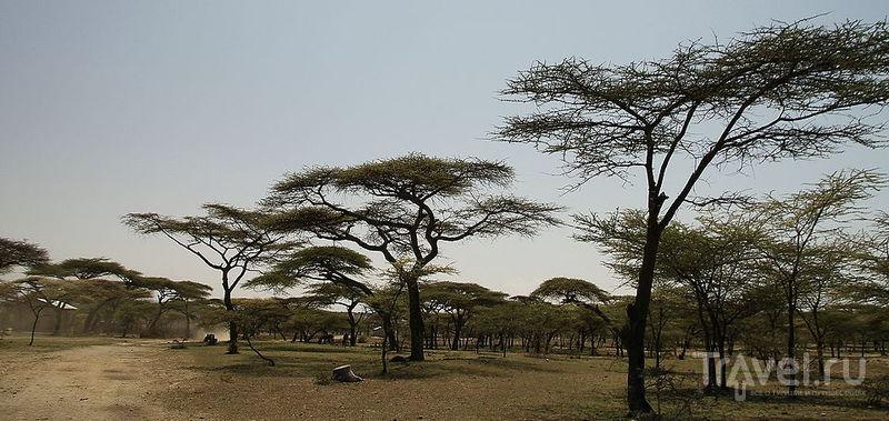 Дикий портрет Рифтовой долины. Национальный парк Абиата-Шала / Фото из Эфиопии