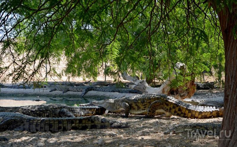 Здесь живут крокодилы... / Фото из Израиля