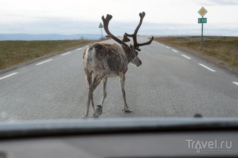 Мурманск-Нордкап. Самая северная точка Европы / Фото из Норвегии
