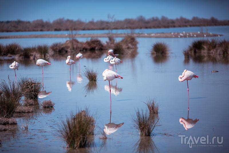 Камарг и орнитологический парк Пон де Го / Фото из Франции