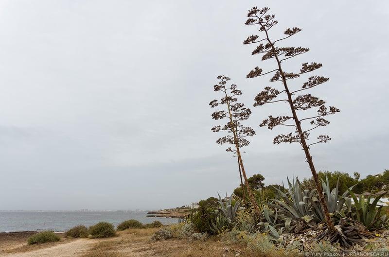 Лучший пляж Мальорки / Фото из Испании