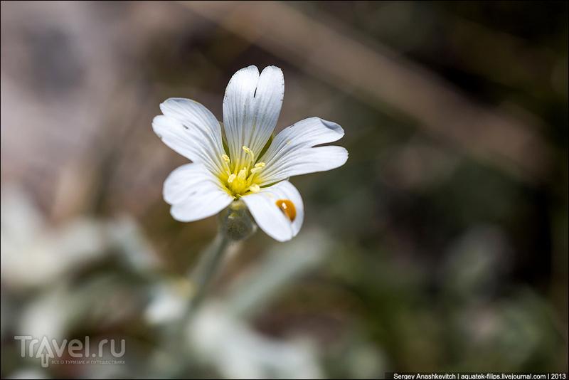 Крымский природный заповедник / Фото с Украины